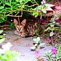 Cat under Shadow.jpg