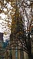 Cathedral Church tree.jpg