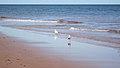Cavendish Beach, Prince Edward Island (471085) (9447875979).jpg