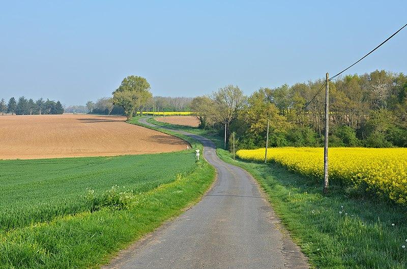File:Champniers 86 Route de campagne près Erveu 2014.jpg