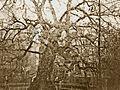 Charter Oak 1855-1.jpg