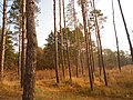 Cherkas'kyi district, Cherkas'ka oblast, Ukraine - panoramio (533).jpg