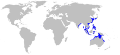 Range of the brownbanded bamboo shark