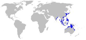 Brownbanded bamboo shark - Image: Chiloscyllium punctatum distmap