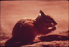 Chipmunk at Campground of Dead Horse Point State Park, 05-1972 (3814151141).jpg