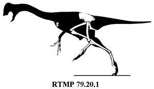 Chirostenotes - Referred specimen RTMP 79.20.1