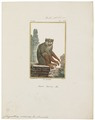 Chrysothrix sciureus - 1798-1803 - Print - Iconographia Zoologica - Special Collections University of Amsterdam - UBA01 IZ20200204.tif