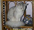 ChupaChups Waldo's Sweet Lullaby.JPG