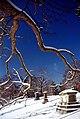 """Cincinnati - Spring Grove Cemetery & Arboretum """"Crypts in a Row - Framed"""" (5431690610).jpg"""