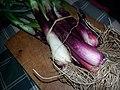 Cipollotti freschi Tropea.jpg