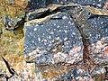 Clast-rich impact pseudotachylite (Sudbury Breccia, Paleoproterozoic, 1.85 Ga; Windy Lake Northwest roadcut, Sudbury Impact Structure, Ontario, Canada) 34 (33862663408).jpg