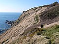 Cliff top path just west of Stair Hole - geograph.org.uk - 694513.jpg