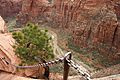 Climbing up to Angels Landing (Zion National Park) (3444011080).jpg