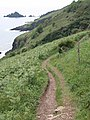 Coast path near Pudcombe Cove - geograph.org.uk - 817427.jpg