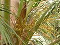 Coconutflower.JPG