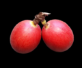 Coffee cherries on black background.png