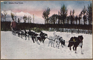 Color post card. Alaska dog team. - NARA - 297824.jpg