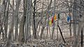 Colored Cloths Hung from Trees - Guelph, Ontario.jpg