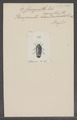 Conognatha - Print - Iconographia Zoologica - Special Collections University of Amsterdam - UBAINV0274 023 07 0004.tif
