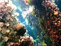 Coral Tank (3479467055).jpg
