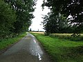 Country Road - geograph.org.uk - 1421909.jpg