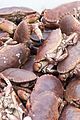 Crab catch (26165369320).jpg