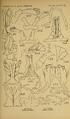 Craspedosomatidae of North America 1895 Plate IX.png