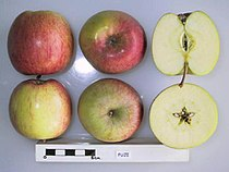 Cross section of Fuji, National Fruit Collection (acc. 1963-019).jpg