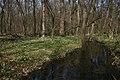Csáfordjánosfai tőzikés erdő.jpg