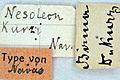 Cueta kurzi type labels.JPG