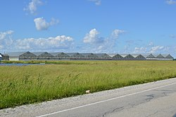 Greenhouses on U.S. Route 40, west of St. Elmo