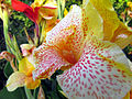 Curico, flores (12646504963).jpg