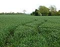 Curves in the corn, Broadwell - geograph.org.uk - 1313869.jpg