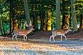Dülmen, Wildpark -- 2018 -- 3750.jpg