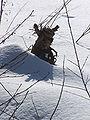 Dřevěná-panda3.jpg
