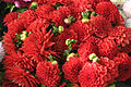 Dahlias 01 - Red.jpg