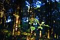 Dark forest (3035221568).jpg