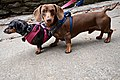 Dawgs at Natural Bridge State Park (30738504636).jpg