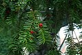 De Caesarsboom te Lo-Reninge - 369504 - onroerenderfgoed.jpg
