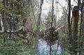 Dead Stream Swamp MI.jpg