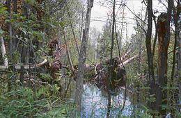 Portal Wetlands Selected Article Wikipedia