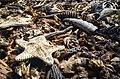 Dead organisms Bohicon (Benin).jpg