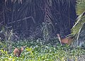 Deer in action.jpg