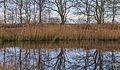 Delleboersterheide – Catspoele Natuurgebied van It Fryske Gea. Bomen spiegelen in Catspoele 01.jpg
