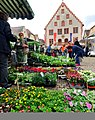 Der regionale Wochenmarkt in Bad Mergentheim. 08.jpg