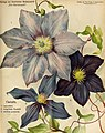 Die Gartenwelt (1913) (20734508589).jpg