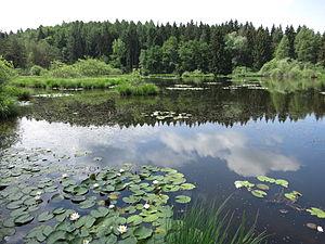 In the nature reserve Dingelsdorfer Ried