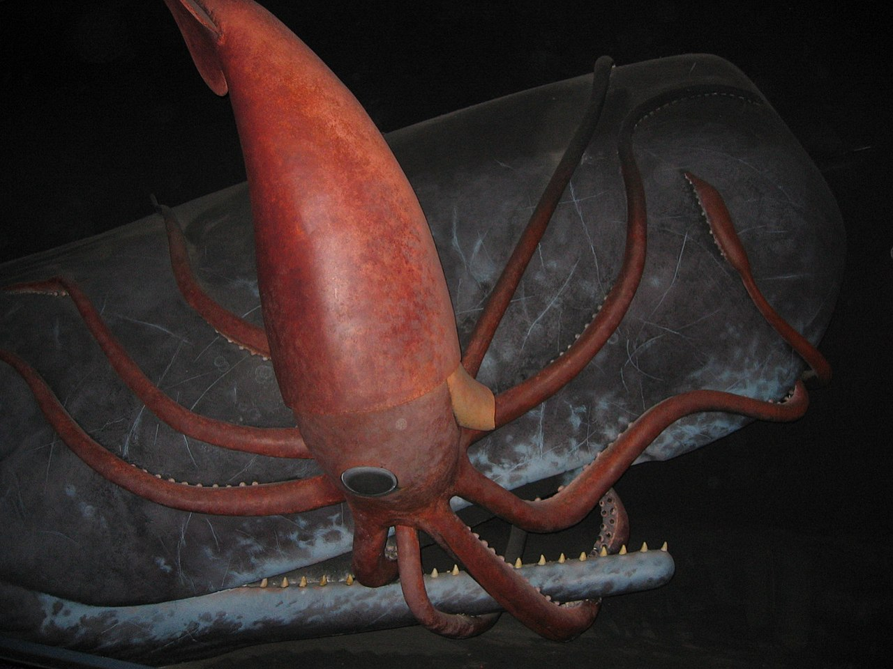 Giant squid and sperm whale engaged in a deep sea struggle