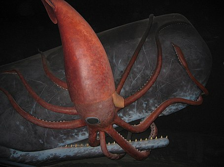 giant squid vs sperm whale