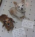 Dog shaming.jpg